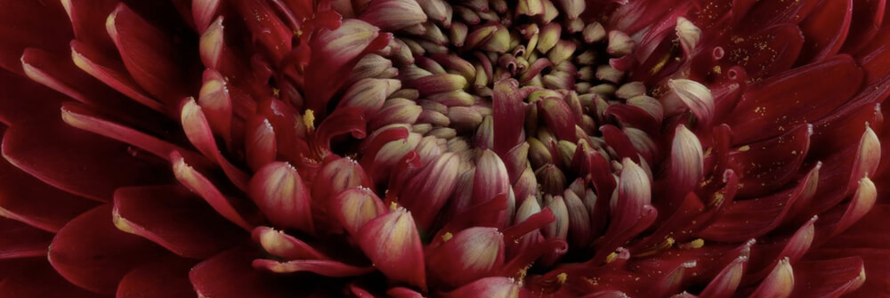 Wallexclusive Premium Flowers