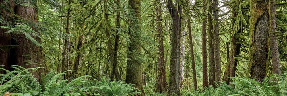 Wallexclusive Premium Forest